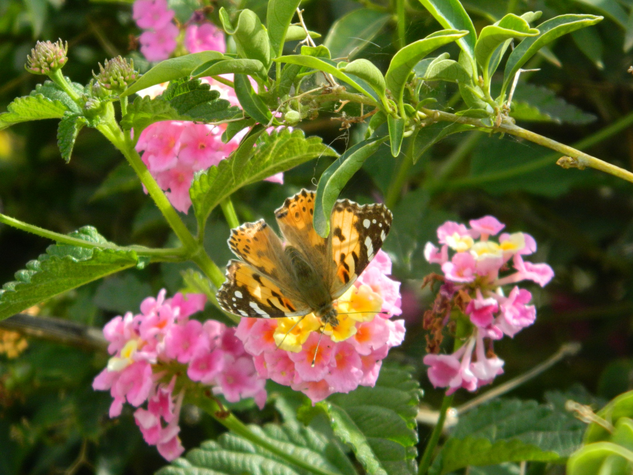 098a Ethical Fashion and Butterflies in Paphos