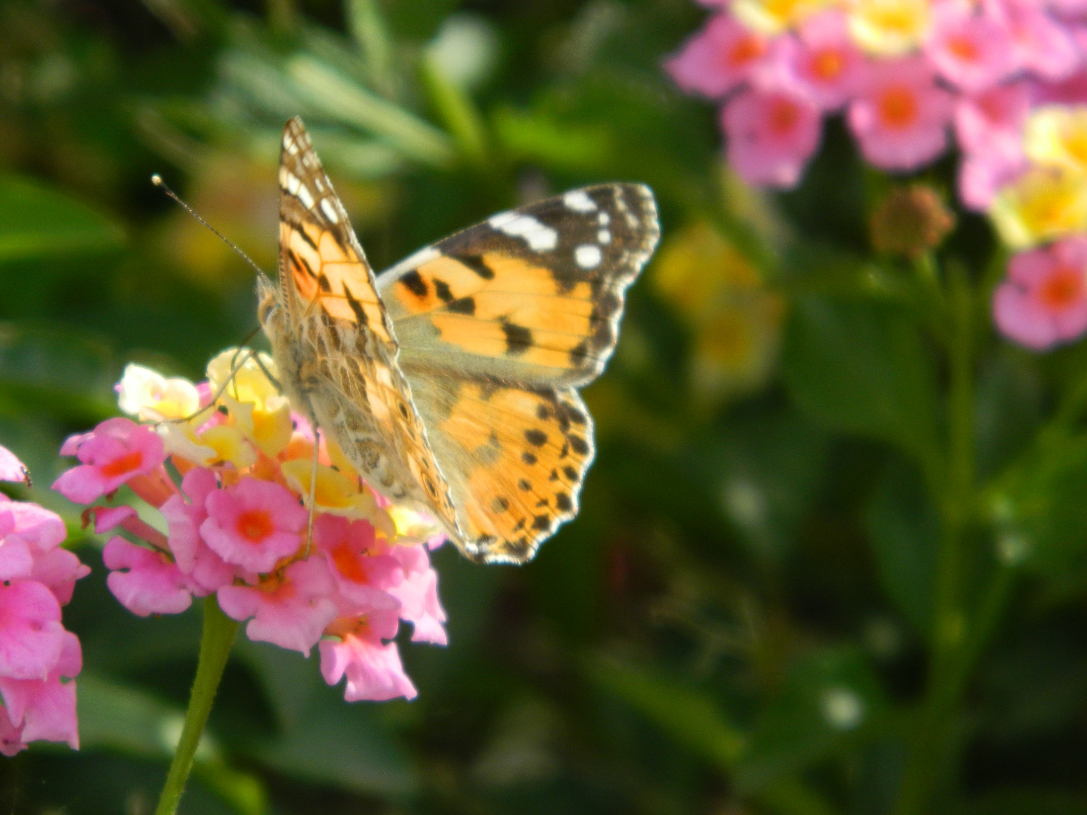103 a Ethical Fashion and Butterflies in Paphos